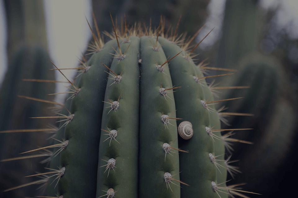cactus in cave creek