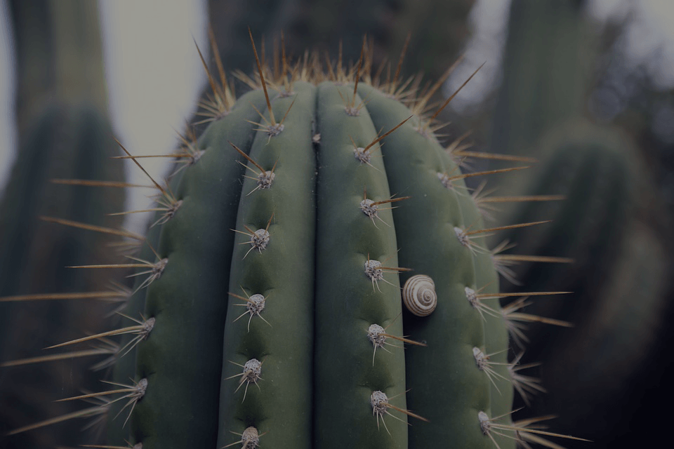 cactus in cave creek